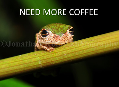 Need More Coffee