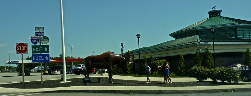 Maine is famous for its moose.