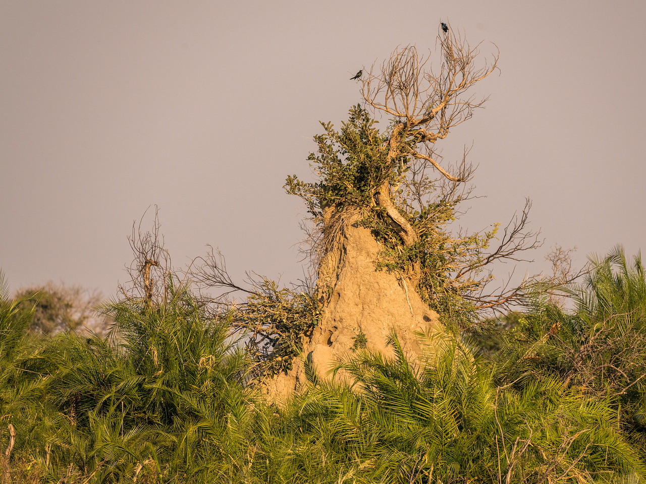 Abandoned Termite Mound