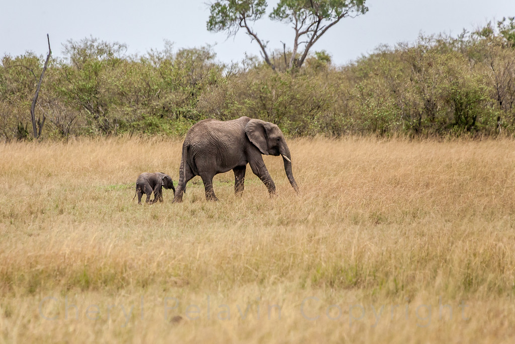 Elephant and Tiny Baby 2