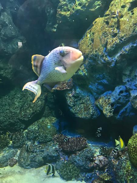 Phuket, Thailand; Phang-Nga Bay Aquarium