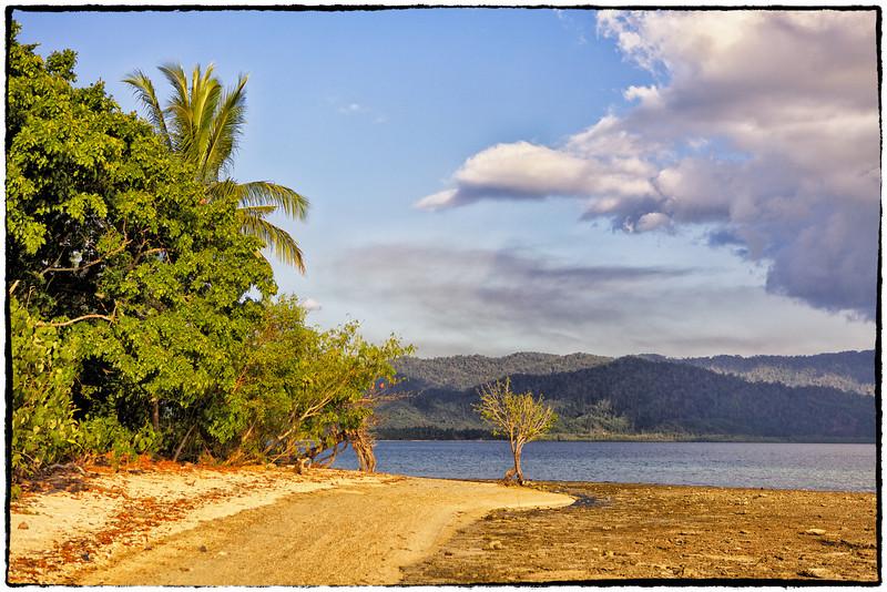 Solo tree on Double Island