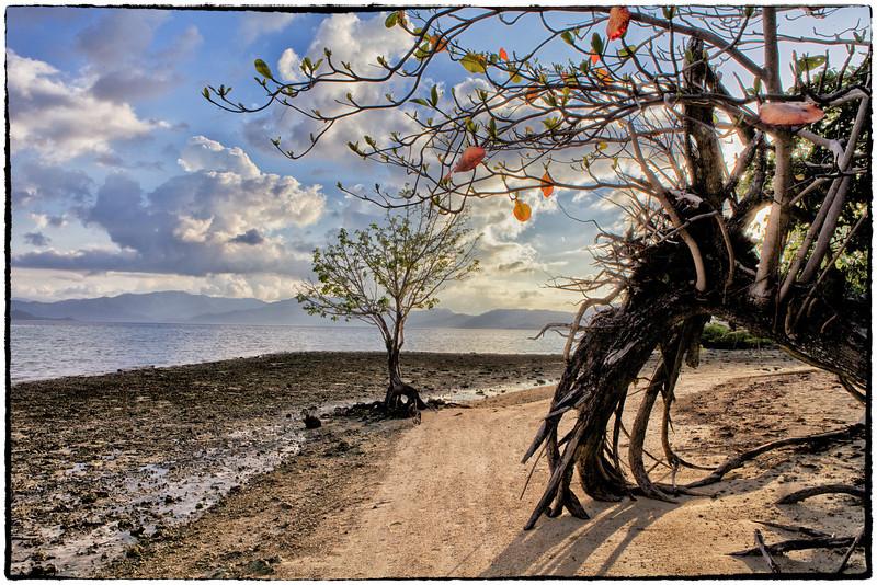 Solo tree on Double Island 3