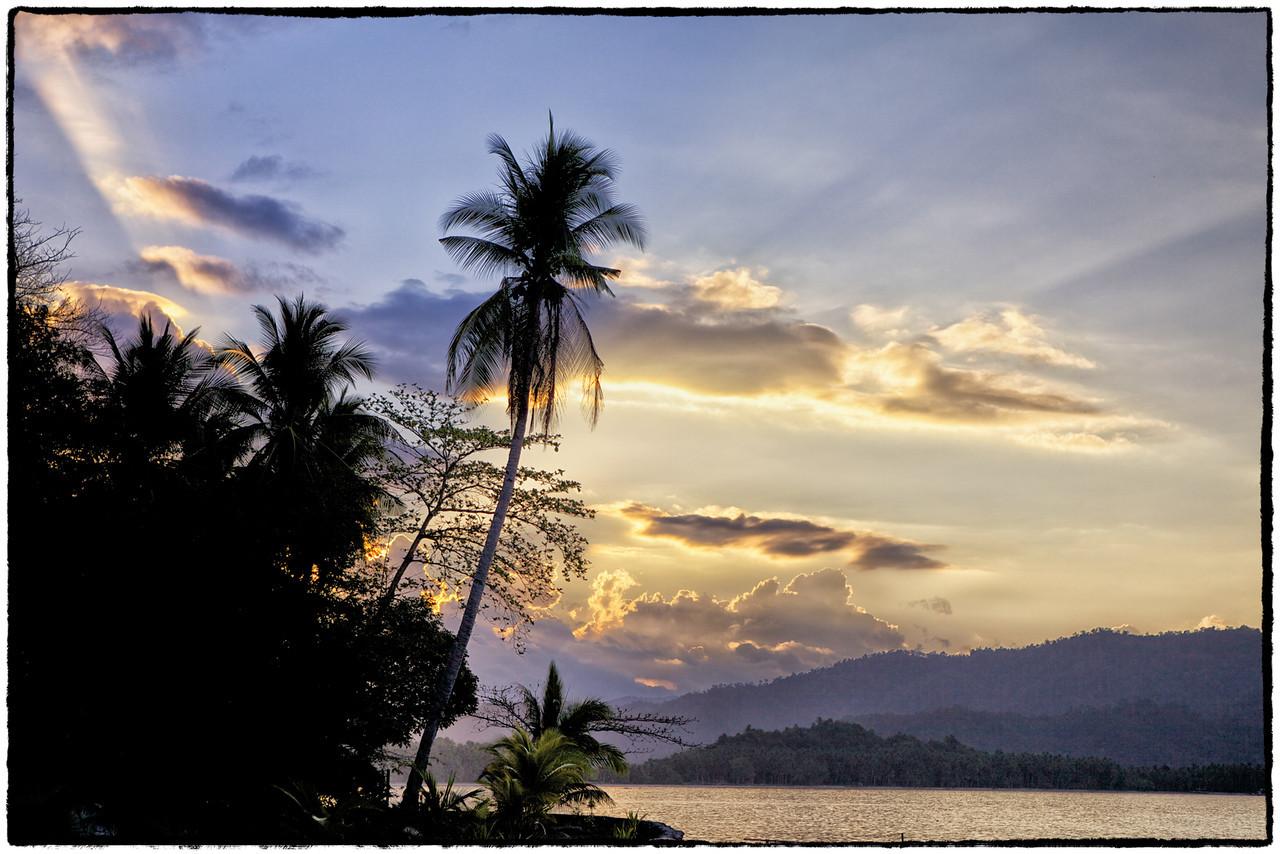 Coconut dawn