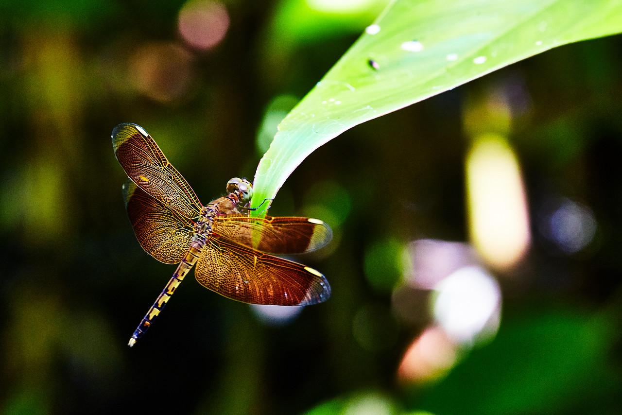 Dragonfly lattice