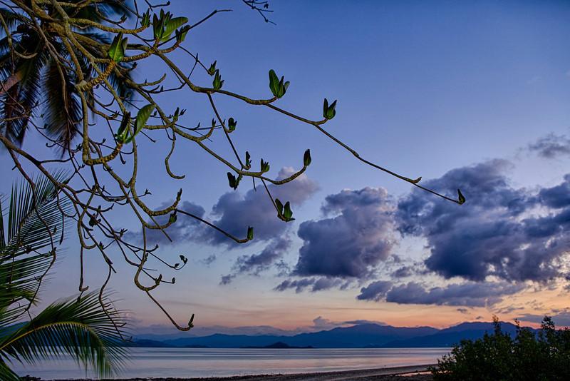 Palm under blue clouds