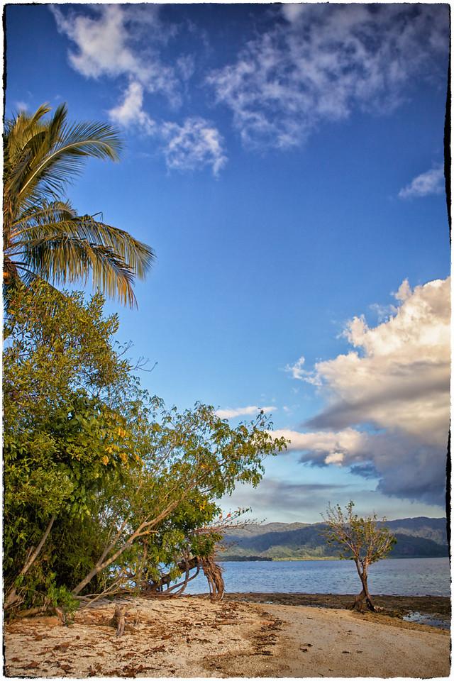 Solo tree on Double Island 2