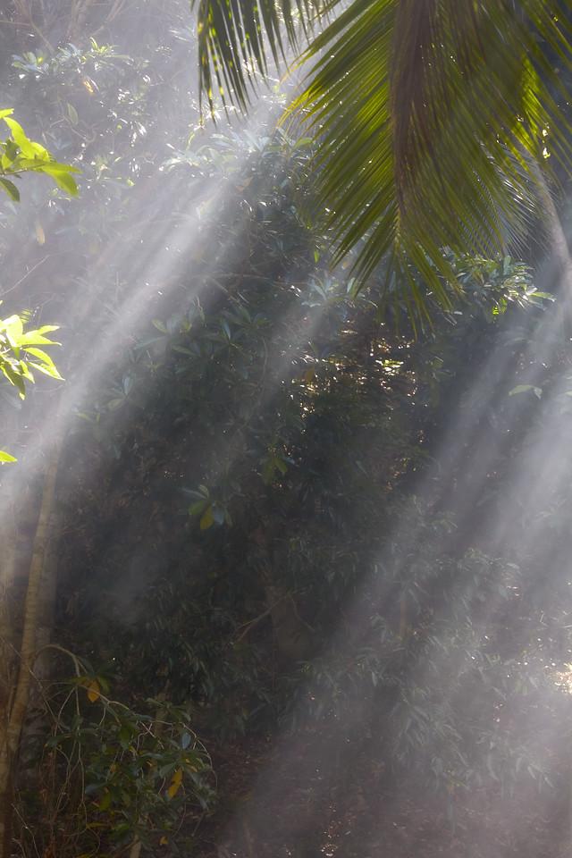 Smoke and palms