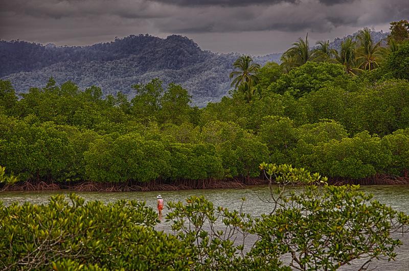 Mangrove paddler