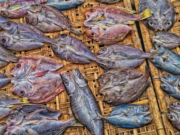 Dried  fish 1