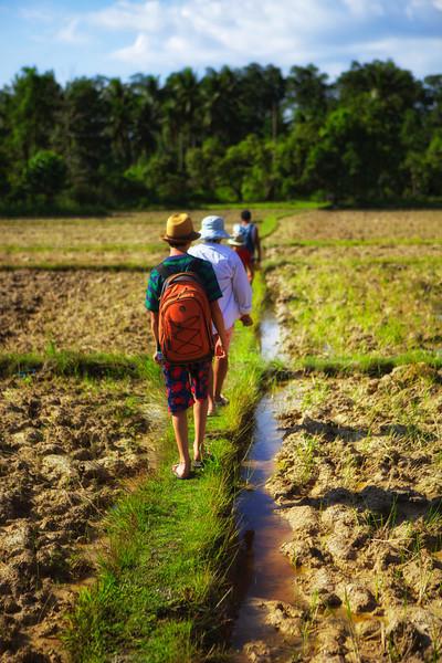 Trek through the paddies