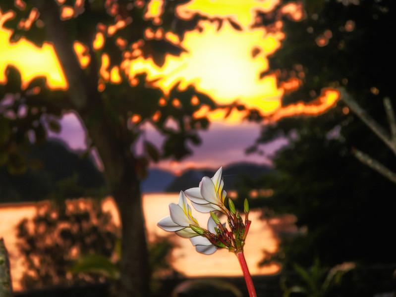 Frangipani sunset