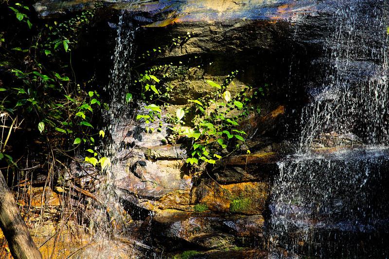Greenery under the waterfall