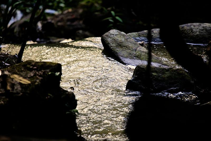 Swirling silver jungle  pool