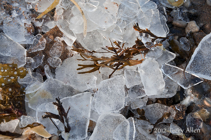 Ice, seaweed and beach rocks