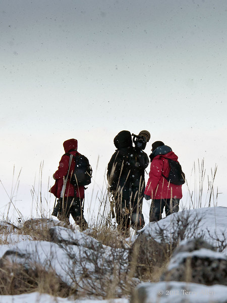 Photographing-polar-bears-in-snow-flurries, Seal River Lodge, Manitoba