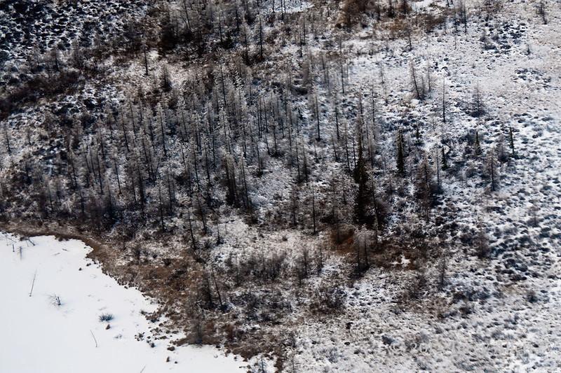 Hudson's-bay-boreal-forest, Manitoba
