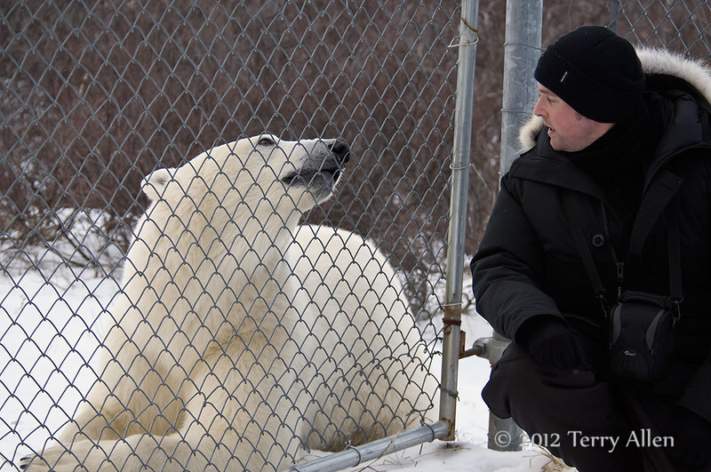 Polar-bear-Who's-in-the-cage-2