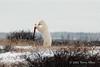Polar bear-makes-environmental-statement-5