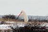 Polar bear-makes-environmental-statement-7