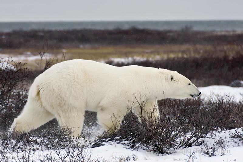 Curious-polar-polar--16