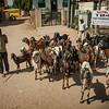 Sawai Madhopur goats