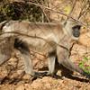 Common Langar
