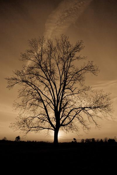 Pickens tree 2