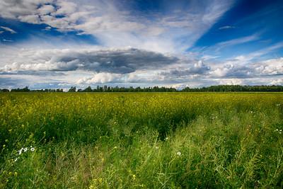 Field of Flowers - Hill of Crosses