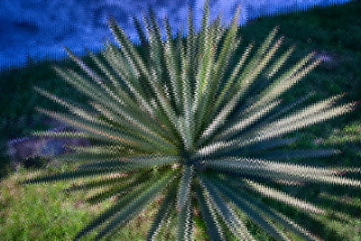 Distortion Agave