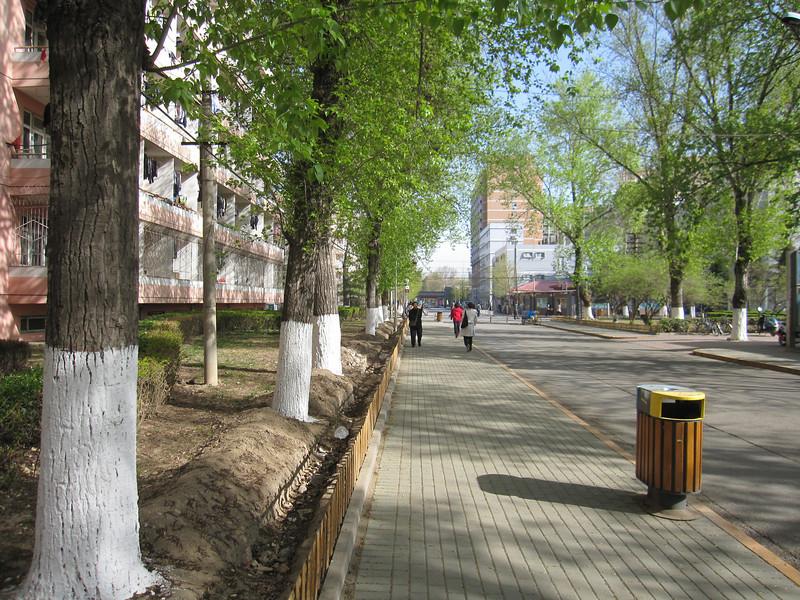4/6, beijing, spring is here