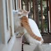 隔壁邻居家的二猫,以前总是从窗户的栏杆上爬过来,老爸逗他们玩过