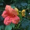 楼下花园的花
