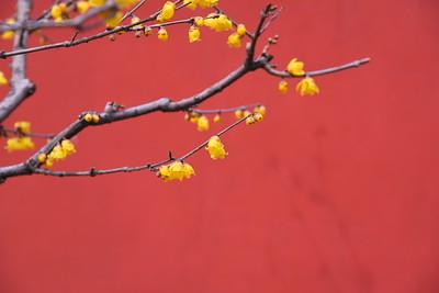 Botanic garden, Mar 4th