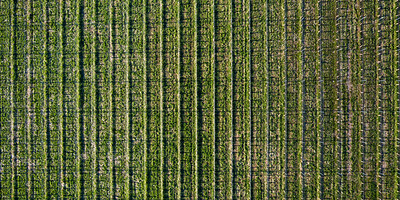 Old Mission Peninsula Vineyard Aerial