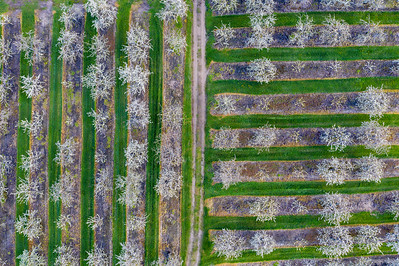 Old Mission Cherry Farm Aerial