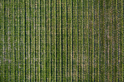Old Mission Winery Aerial