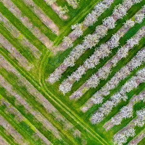 Cherry Farms from The Sky