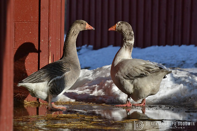 20140314-Farm_Sanctuary_Snow-8238