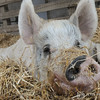 20140316-Farm_Sanctuary_Snow-4698