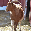 20140315-Farm_Sanctuary_Snow-8333