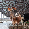 20140314-Farm_Sanctuary_Snow-4374