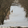 20140314-Farm_Sanctuary_Snow-8260