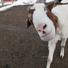 20140315-Farm_Sanctuary_Snow-4563