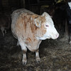 20140316-Farm_Sanctuary_Snow-4697