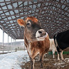 20140314-Farm_Sanctuary_Snow-4375