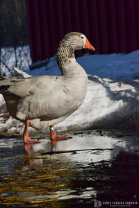 20140314-Farm_Sanctuary_Snow-8233