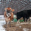 20140314-Farm_Sanctuary_Snow-4371