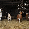 20140315-Farm_Sanctuary_Snow-4603