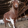20140314-Farm_Sanctuary_Snow-4327